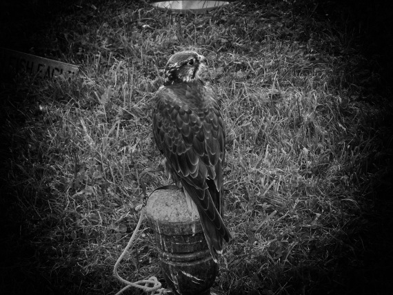 Bird of Prey-copy_edited-1