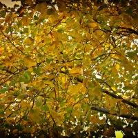 Festival Of Leaves – Week 6
